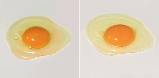 egg painting, which one is real?