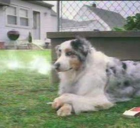 smoking dog